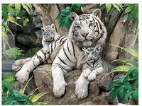 Gorący Sprzedaje Białe Tygrysy Drukowane DIY Cyfrowy Obraz Olejny Numerów Ręcznie Malowane Obraz Olejny 40x50 cm Nie rama