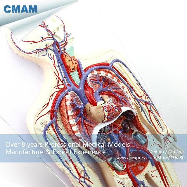 Tienda Online 12488 CMAM-HEART12 Corazón Desmontable Sistema ...