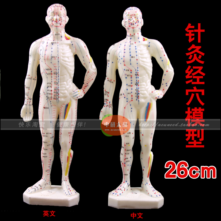 26cm Male Human Acupuncture Points Model Acupuncture Point Model Chinese body model for acupuncture point 22cm head acupuncture point model head acupuncture four function model acupuncture model