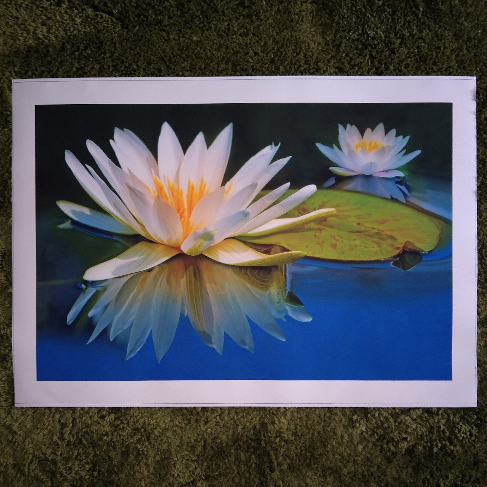 Zz1277 Modern Canvas Wall Art Prints Beautiful White Lotus Flower