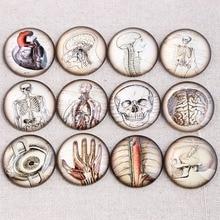 Reidgaller микс Анатомия сердца фото круглый стеклянный кабошон 20 мм 25 мм 30 мм diy плоская задняя часть ручной работы ювелирных изделий