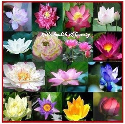 pieces mixing different species nelumbo nucifera seeds, Beautiful flower