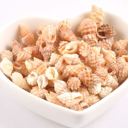 11-15mm Natural Mini Spiral SeaShell Scrapbook Craft for glass bottle decoration DIY handmade 100pcs TRS0246