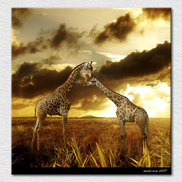 ᗕQuality Canvas prints Art painting of giraffe from Africa animals ...