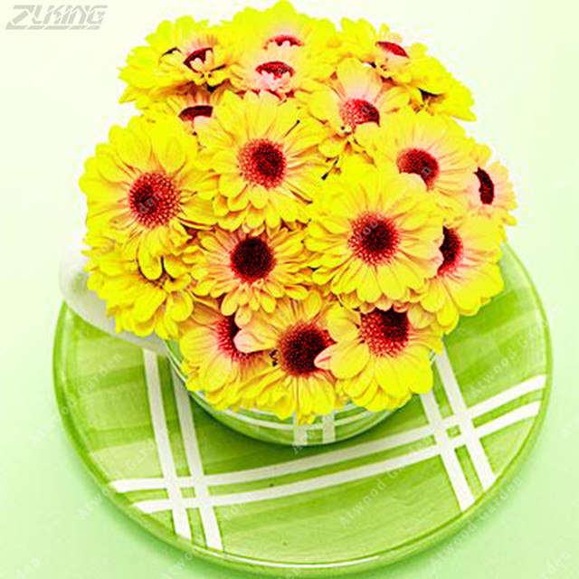 Zlking 200 pcs italian daisy cheap yellow chrysanthemum flowers zlking 200 pcs italian daisy cheap yellow chrysanthemum flowers bonsai beautiful exotic fast growing garden indoor mightylinksfo
