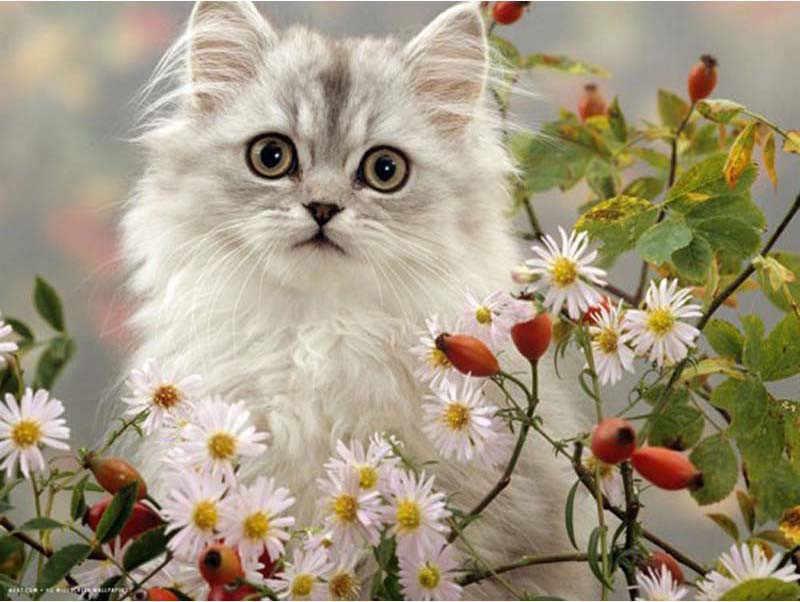 Открытки с добрым днем с котами, создать поздравление