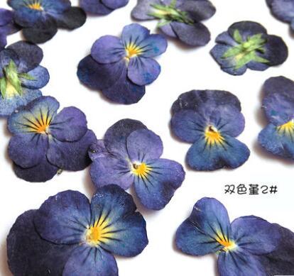 10 шт./лот двухцветные сладкие фиолетовые маленькие сушеные цветы сохраненные цветы материалы для diy закладка для мобильного телефона оболо...