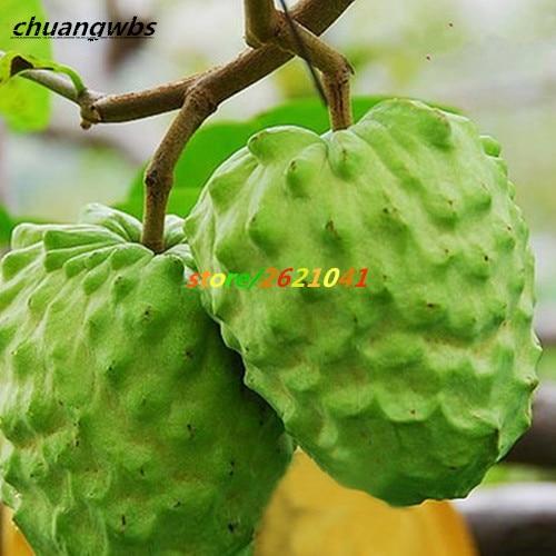 hawaiian fruit graviola fruit