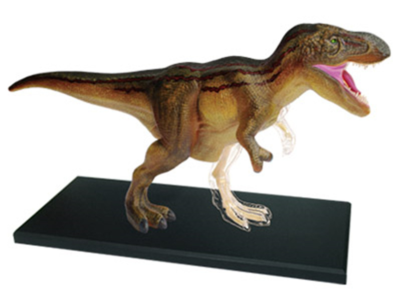 4d Jurassic Dinosaur Tyrannosaurus Rex Puzzle Assembling Skeleton Toy Animal Organ Anatomy Medical Teaching Model4d Jurassic Dinosaur Tyrannosaurus Rex Puzzle Assembling Skeleton Toy Animal Organ Anatomy Medical Teaching Model