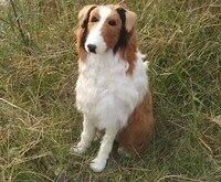 كبير الإبداعي محاكاة الراعي الكلب نموذج البلاستيك و الفراء الجلوس دمية هدية 47x16x44 سنتيمتر a168