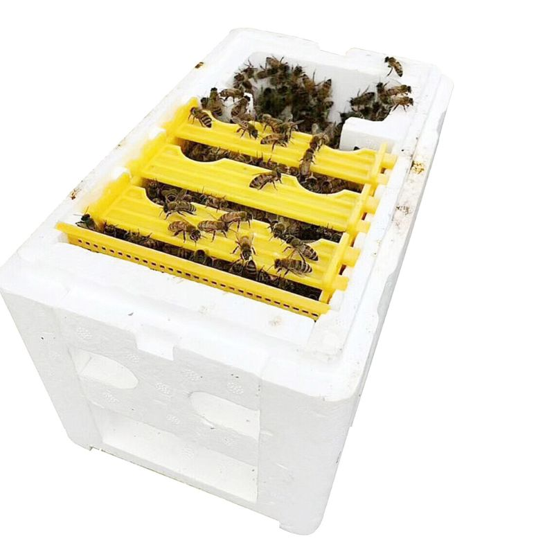 Image 4 - Bee Hive Beekeeping King Box Pollination Box Foam Frames Beekeeping Tool Kit-in Beekeeping Tools from Home & Garden