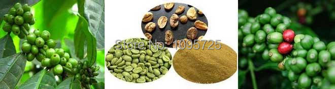 100% Natural Green Coffee Bean Extract,Green coffee extract 50% natural green coffee bean extract chlorogenic acid 200g lot