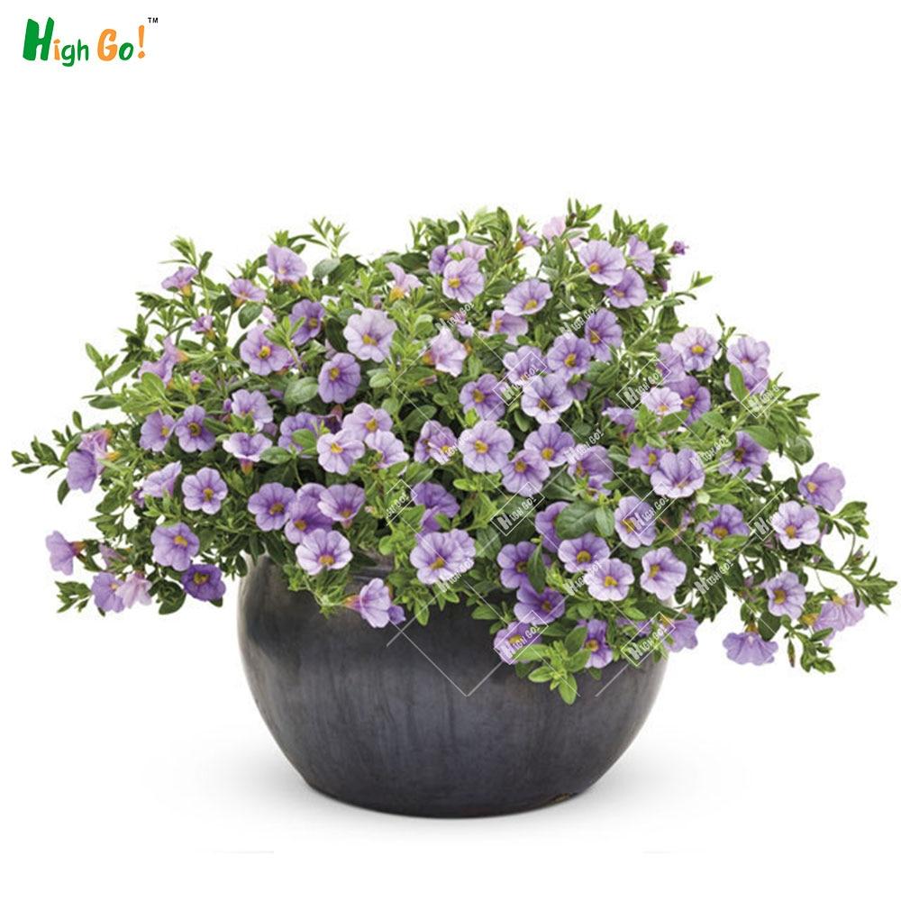 30 Pcs / Bag,, Diy Potted Plants, Indoor / Outdoor Morning glory ... for Outdoor Potted Plants And Flowers  155fiz