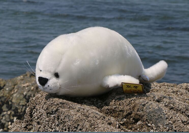 about 38cm white seal plush toy soft doll birthday gift b4880 middle lovely plush high quality seal toy cute white seal doll gift about 35cm