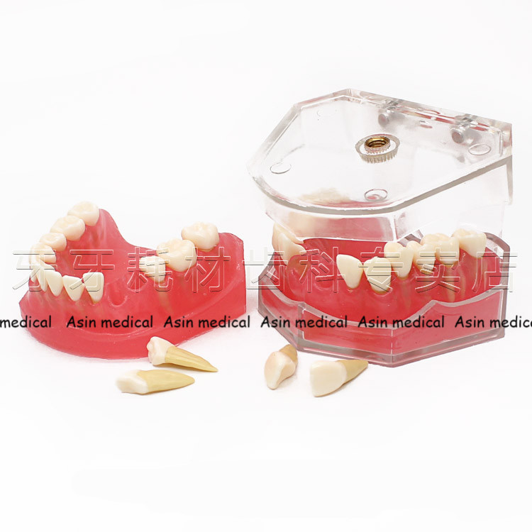 2017 NEW Soft Gingival Dental Mold Removable Teeth May Gingival Oral Teaching Model Gingival Practice teeth Mold teeth Model free shipping good quality dental soft gum teeth model with tougnetypodont w 32 removable teeth nissin 200 compatible