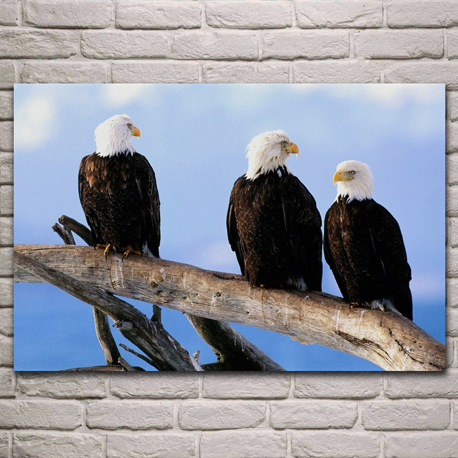 Alaskan Bald Eagle Art Print Home Decor Wall Art Poster F