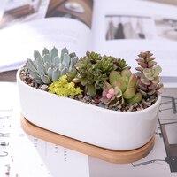 https://ae01.alicdn.com/kf/HTB109XnXtzvK1RkSnfoq6zMwVXaD/1-Minimalist-Succulent-Planter-Home-Office.jpg