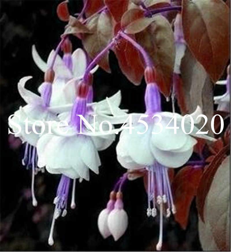 100 pz Multicolor Doppi Petali Fucsia Bonsai Fiore In Vaso Piante Da Giardino Appeso Fucsia Fiori Piante D'appartamento Decorazione bonsai