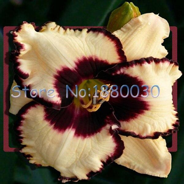 ツ)_/¯Style japonais fleur d\'hibiscus graines forte BRICOLAGE maison ...