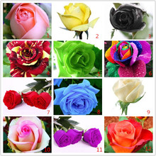 Free shipping .100pcs  Rainbow rose seeds Beautiful rose seed Bonsai plants Seeds for home & garden 49%