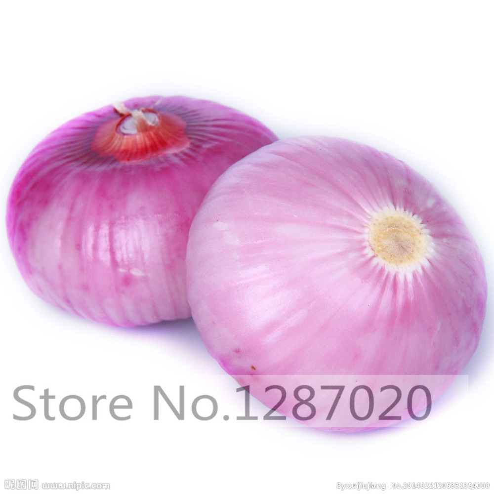 100/bag Fresh Giant purple Onion Seeds vegetable seeds 95%+ germination, vegetable onion seeds for home garden