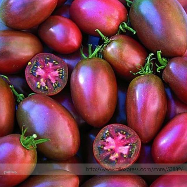 Paquete profesional de tomate púrpura ucraniano 100 piezas, grandes plántulas de árbol de frutas con forma de ciruela en forma de 3-4''