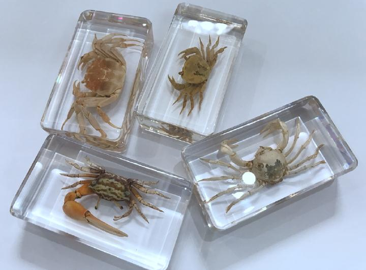 FREE SHIPPING Yqtdmy 4 Pcs Vintage Mixed Design Crab Specimen Insect Clear Specimen