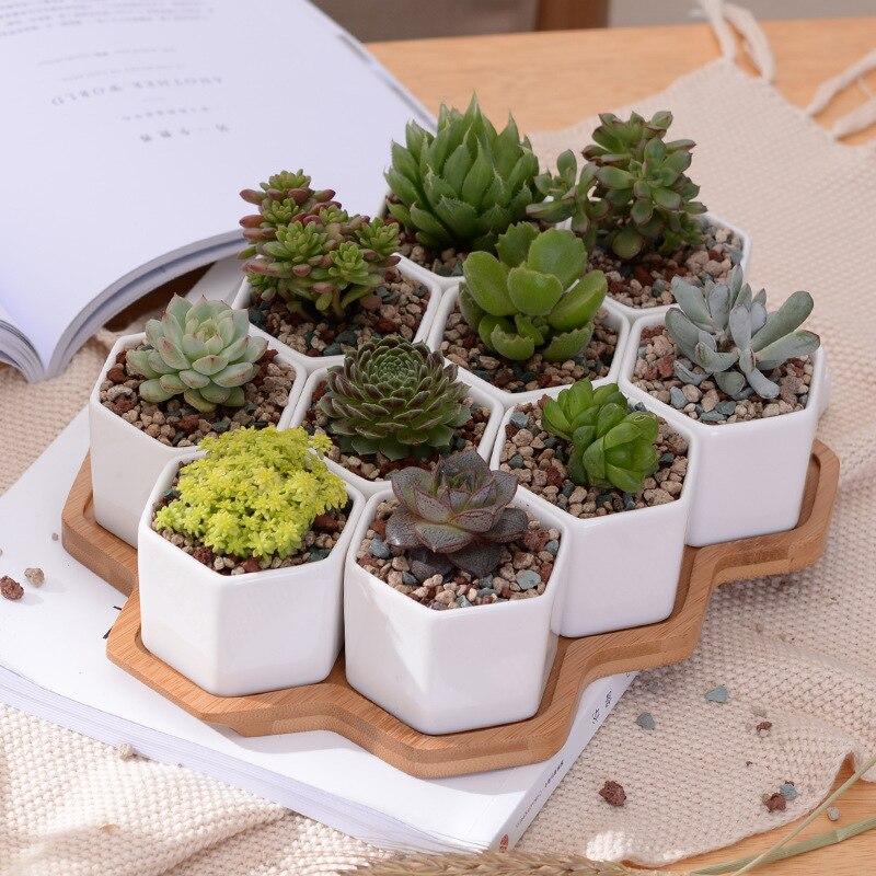 Set of 10 Hexagon Flowerpots White Ceramic Succulent Plant Pot with Bamboo Stand Bonsai Planter Garden