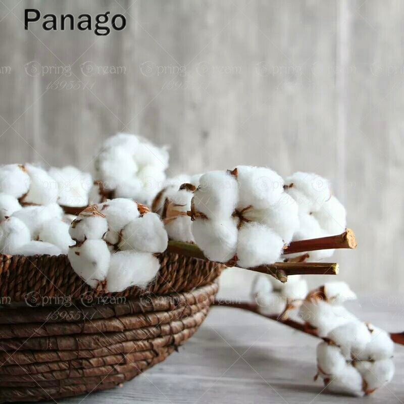 10pcs White Cotton Seeds crops, flower seeds easy to grow DIY Home Garden Plant seeds Happy farm Gossypium seeds Cotton fabric