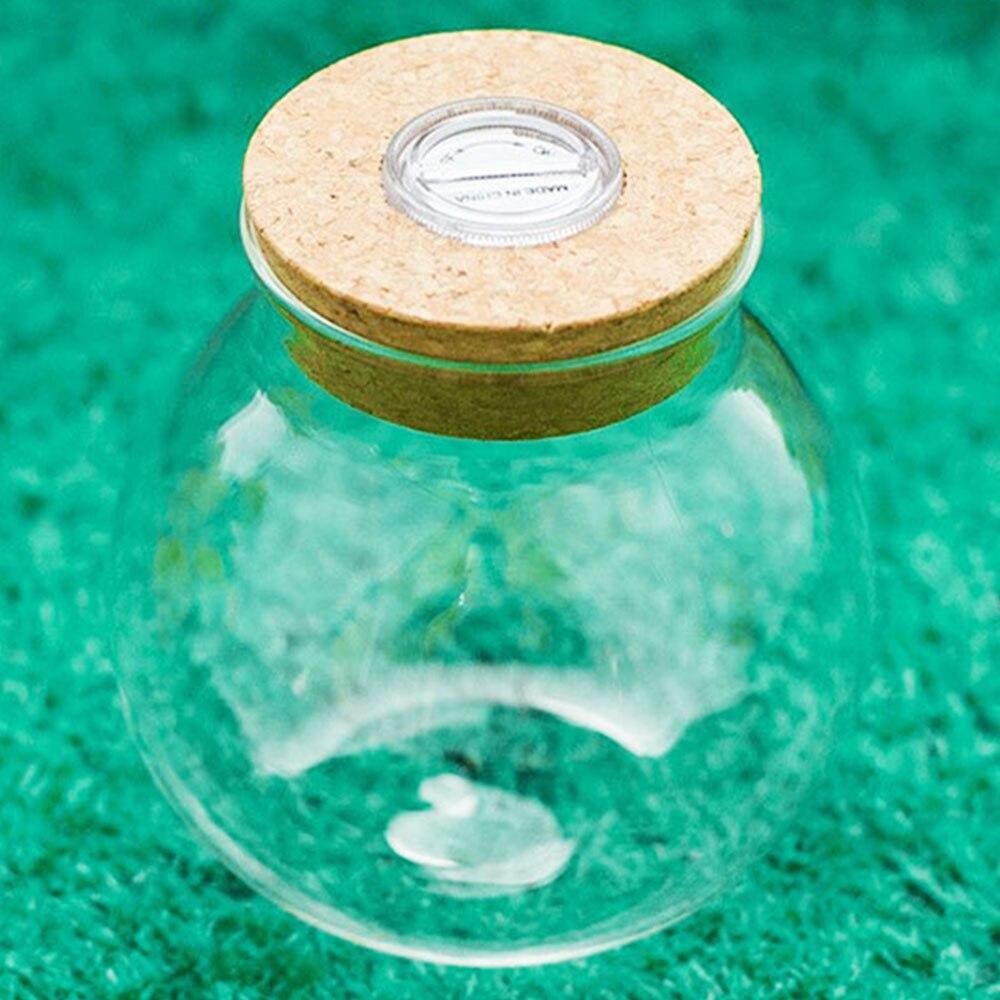 10 см микропейзаж LED Террариум Wish Bottle ночник аквариум подарок DIY новинка подарочная лампа с кнопкой