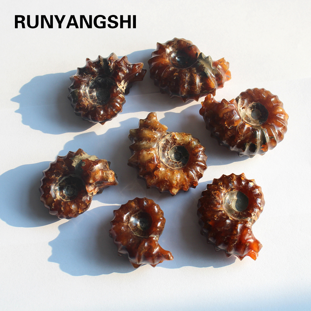 Natural Ammonite Snail Marine Paleontological Fossil Conch Nautiloidea Mineral Specimen Stones Collection Students Children Gift