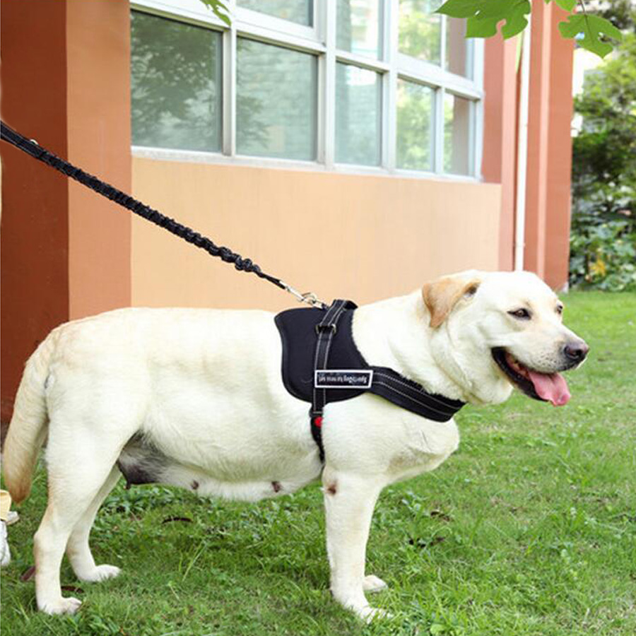 Leather Durable Soft Padded Vest Medium & Large Pet Dog ...