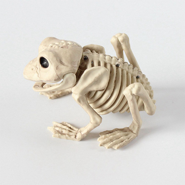 Animal Skeleton Model Bat/Frog/Lizard Bones Halloween Party ...