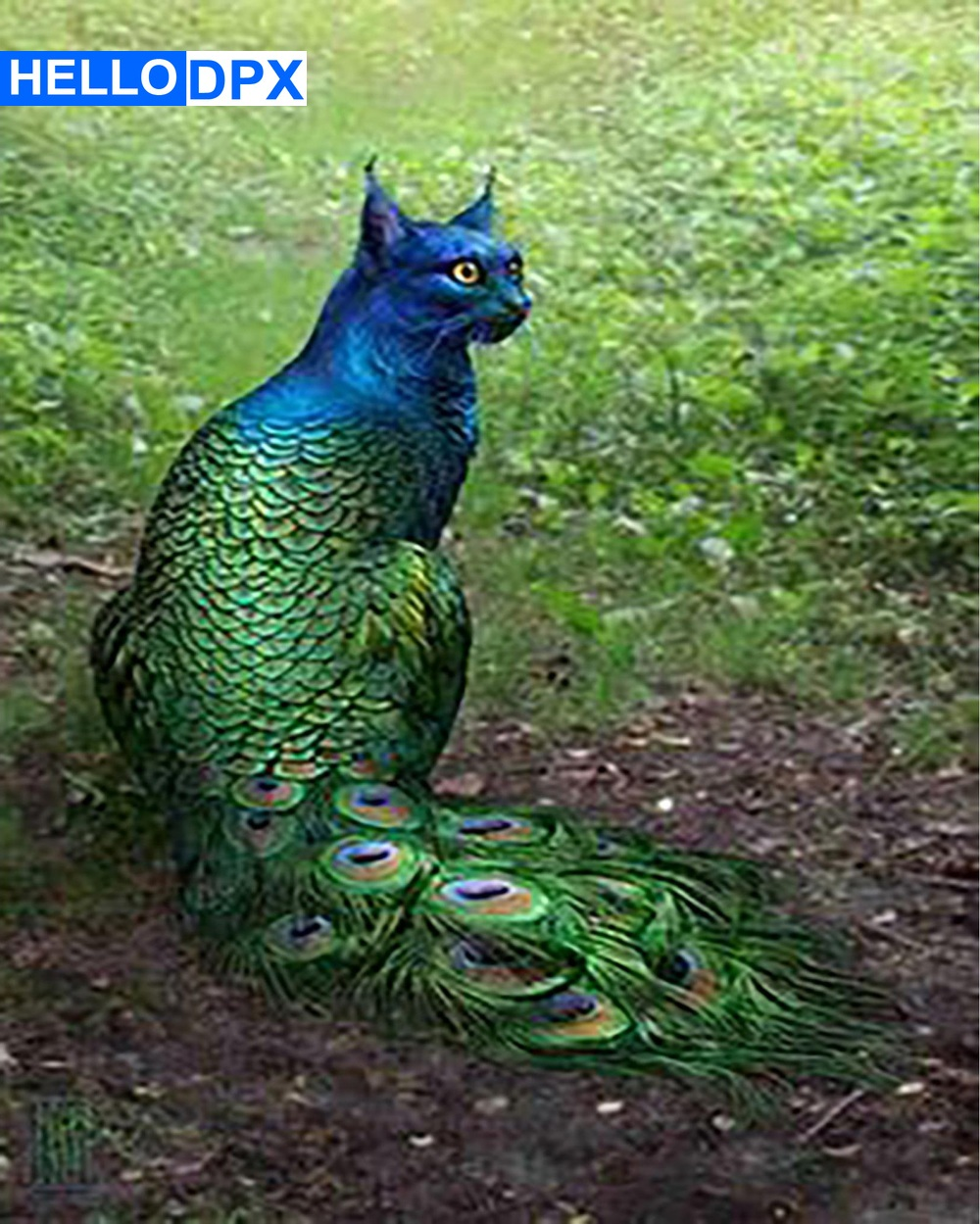 HelloDpx   5d Diamond Painting New Arrivals Embroidery Sale Cat Peacock Rhinestones Pictures Diamond Mosaic  Halloween Pastoral partes del cable coaxial