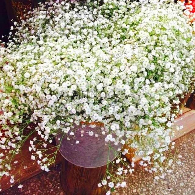 Подлинная! Гипсофила метельчатая растений, многолетний сад цветок Plantas, Бонсай завод для наружного, маленький, средний и большой, 100 шт./пакет
