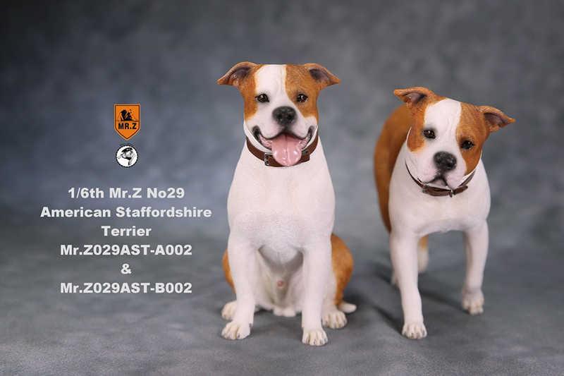 1/6 figura collectible cena acessórios mr. z real animal não. 29 postura americana staffordshire terrier com cabeça trocada