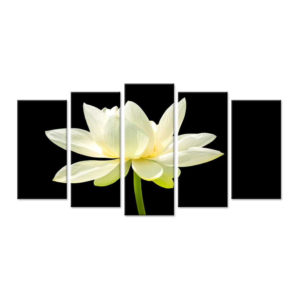 Large 5 Pieces White Lotus Flower On Black Background Photograph