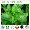 Hot Selling 100% Natural Peppermint Leaf Extract 40% Menthol Mint Extract Low Price Peppermint Powder 200g
