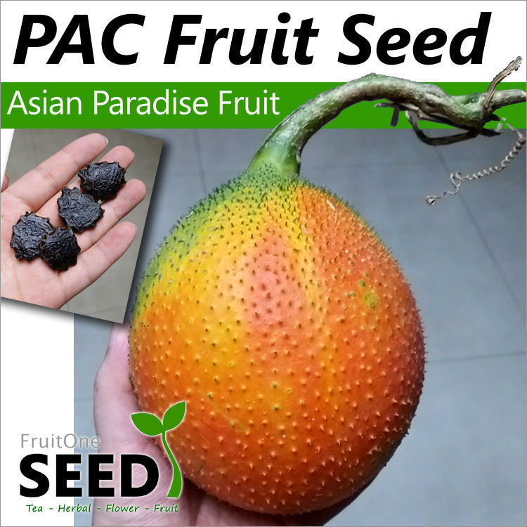 hot sale gac fruit seeds south east asia 5 pcs vegetable fruit seed home garden landscape plant free shippingin bonsai from home u0026 garden on
