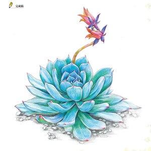 Image 3 - 새로운 컬러 연필 기본 자습서 도서: 23 스타일 succulents 아트 북에 배우기