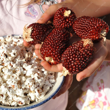 High germination strawberry corn seeds, green Non-GMO fruit vegetable seeds grain cereals plant for home garden 20 pcs/bag