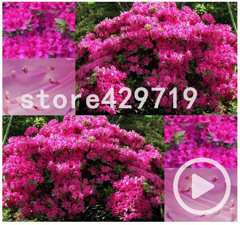 garten baum dekor-kaufen billiggarten baum dekor partien aus china, Best garten ideen