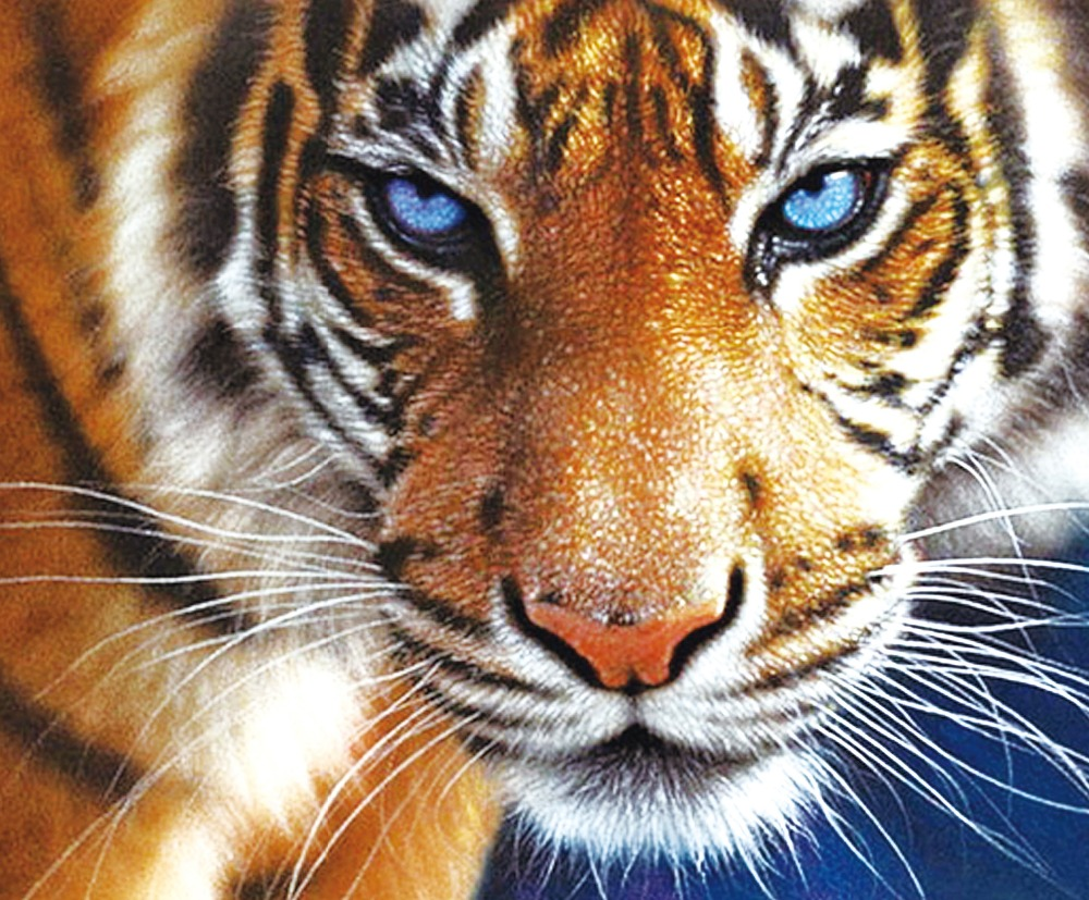 0d29c7e6468 5D diy diamond painting animal tiger pictures painting rhinestones cross  stitch needlework home decorative relative gifts