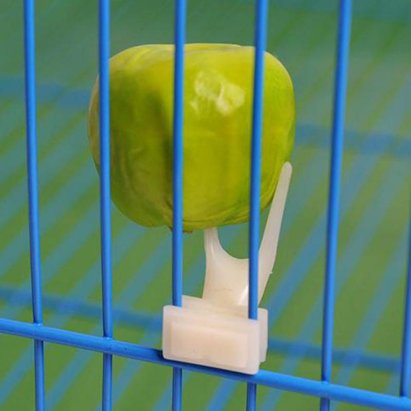 Birds Parrots Fruit Fork font b Pet b font Supplies Plastic Food Holder Feeding On Cage