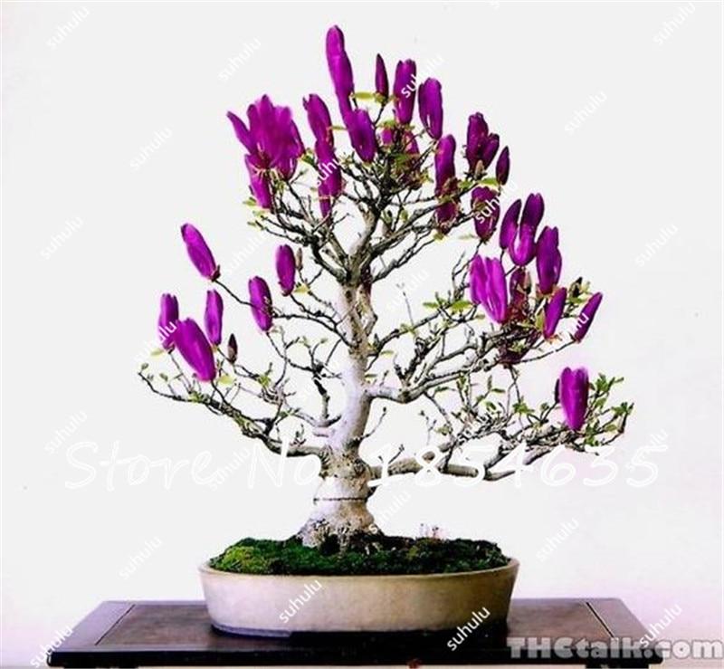 Populair Beroemd Planten Met Bloemen Voor Binnen CB19 | Belbin.Info &ZZ87