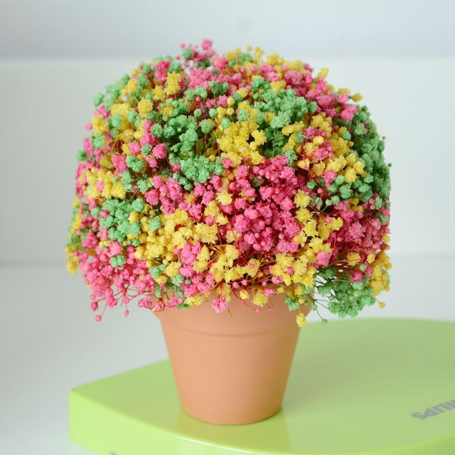 Christmas Gifts Eternal Life Babys Breath Of The Colored Birthday Gift Teacher S Day