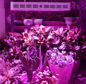 Image 5 - Led Grow Light Full Spectrum 600w 1000w 1200w 1500w 1800w 2000w for Indoor Tent Greenhouses Hydroponics  Flowering Led Lights