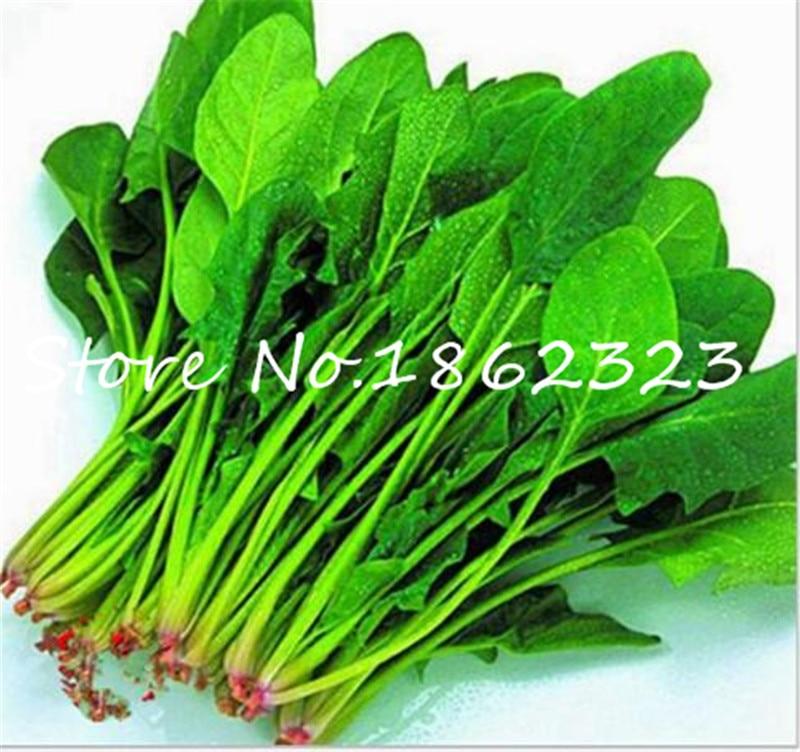 500 шт.. Водный шпинат Овощной бонсай Kangkong, китайский шпинат или Watercress срок продвижения шпинат бонсай органический зеленый