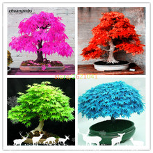 20 pcs/bag japanese maple toronto leafs tree Perennial ornamental plants fire bonsai garden plant