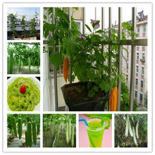 Taiwan 's long green balsam pear bitter melon bonsai four seasons sowing garden veranda vegetable bonsai 10pcs(China)